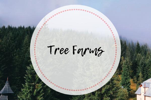 Tree Farms in Orange County