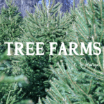Orange County's Guide to Tree Farms