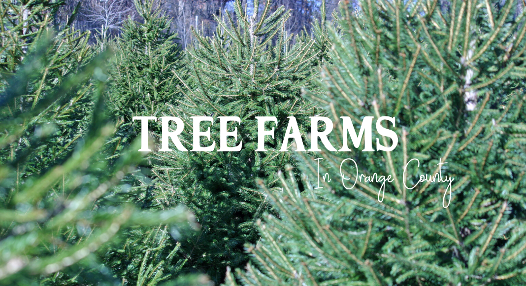 christmas trees orange county