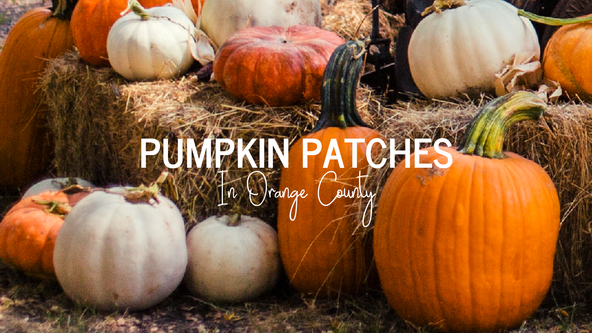 Pumpkin Patches In Orange County