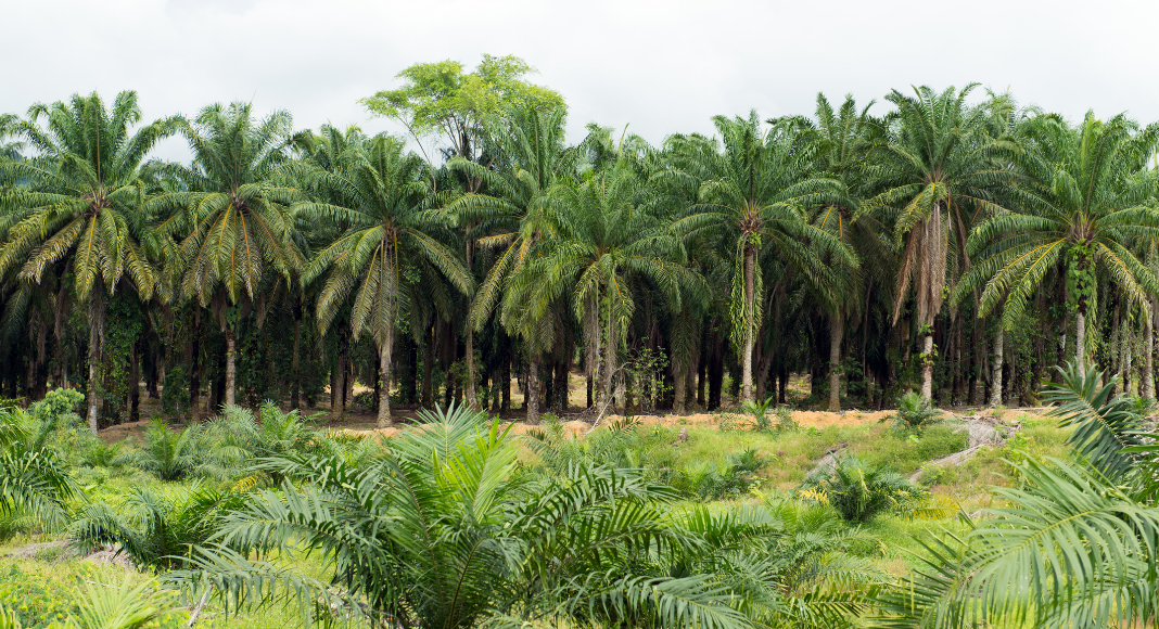 Malaysian Palm Oil - Know The Facts Before Making Any Decisions