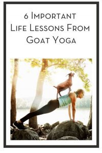 6 Important Life Lessons From Goat Yoga PIN
