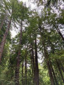 Trees set the stage for awesome camping tips