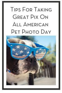 Tips For Taking Great Pix On All American Pet Photo Day PIN