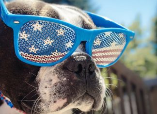 Tips For Taking Great Pix On All American Pet Photo Day